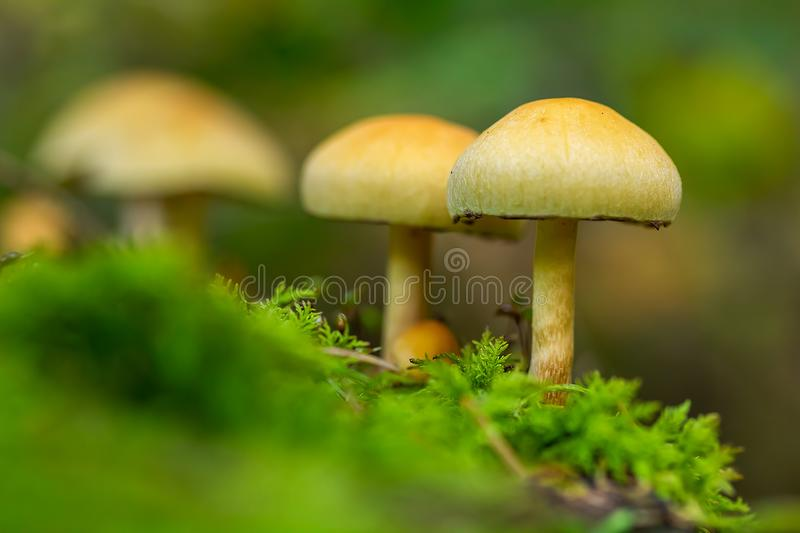Tiny fungus grows green lawn stock images