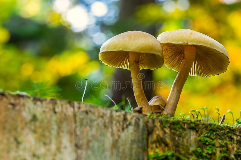 Tiny fungus grows green lawn royalty free stock image