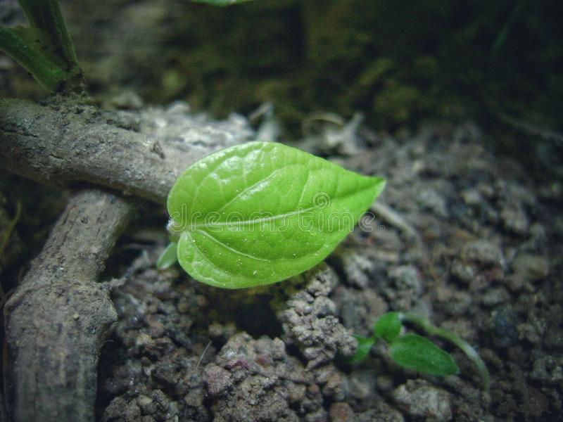 A tiny green leaf and macro photography royalty free stock photos