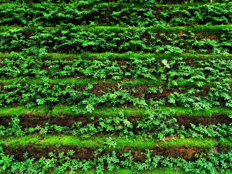 Tiny green leaves on the wall. stock photos