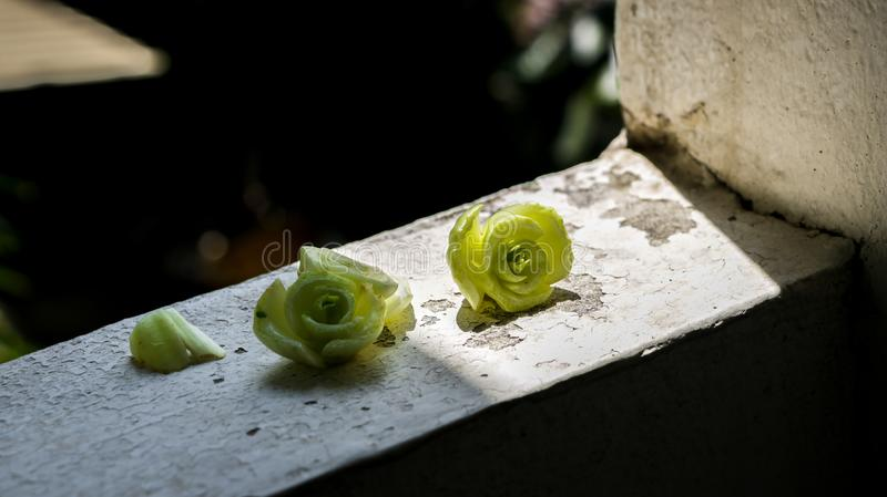 Tiny Green Lettuce/ Cabbage Ends on Dirty Old Wall Texture - Sun. Tiny Green Lettuce/ Cabbage Ends Look Like Roses/ Flowers in the Sun. Taken on my apartment stock images