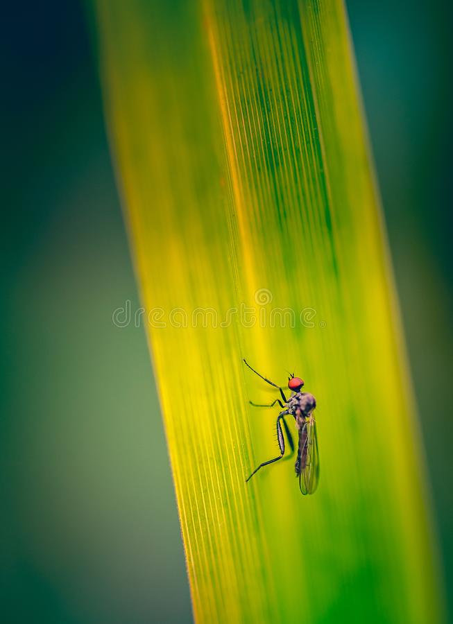 insect alone fly red and black small in summer on a green and yellow grass royalty free stock photos