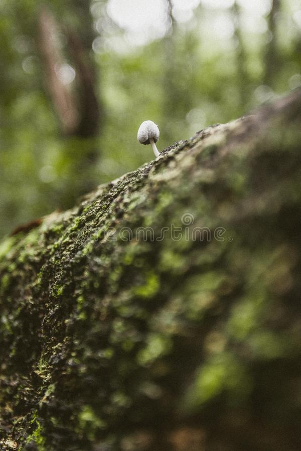 Tiny Mushrooms growing out of tree royalty free stock photography