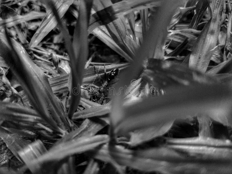 Tiny ones matter. Ants, blackand, blackandwhite stock photo