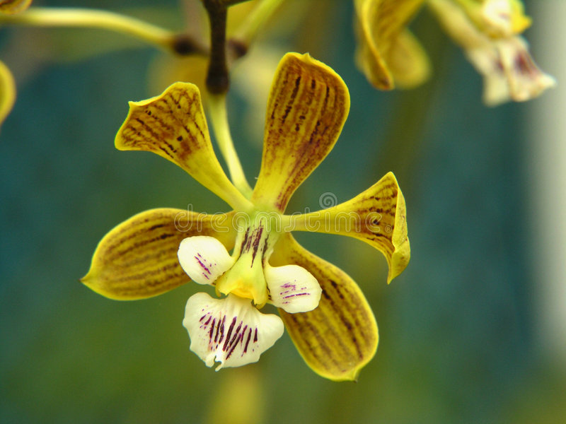 Tiny orchid stock image