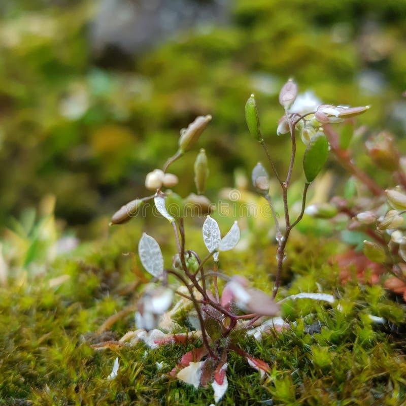 Tiny plant stock photos