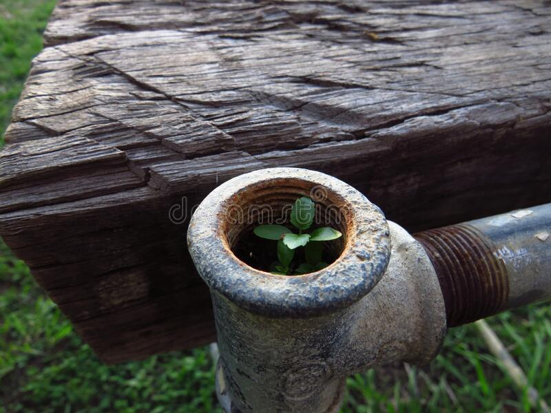 A tiny plant growing in a pipe. A tiny weed grows in the end of a galvanised water pipe in a garden royalty free stock image