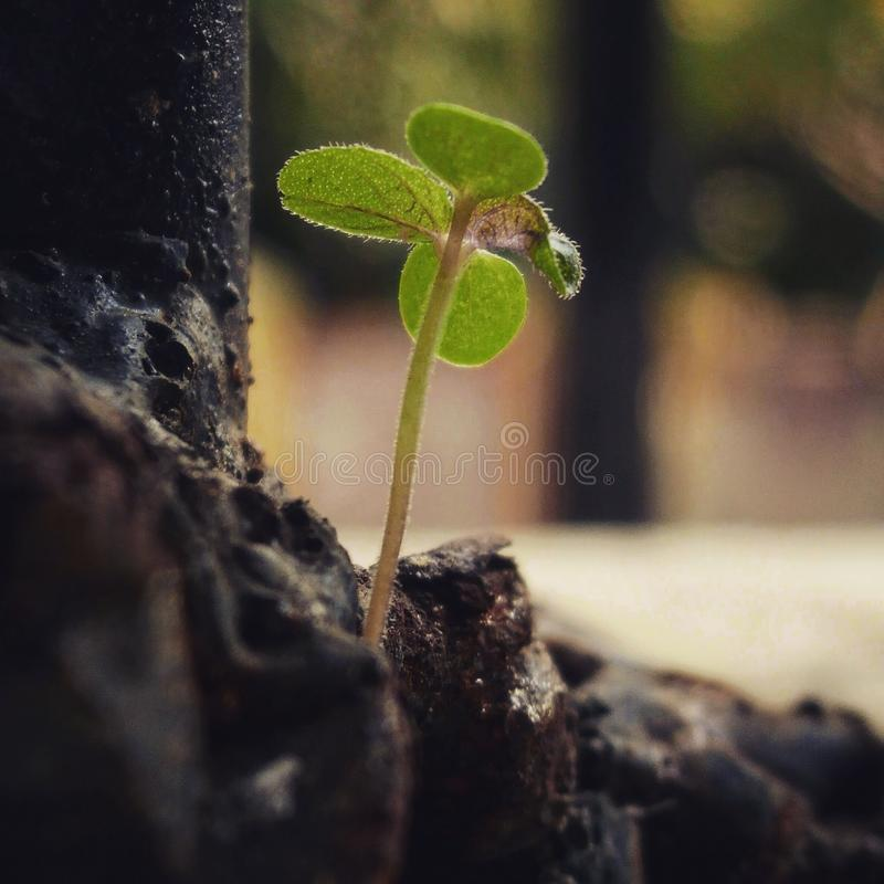 Tiny Plant. A Small Plant Life Beside The Rock stock photography