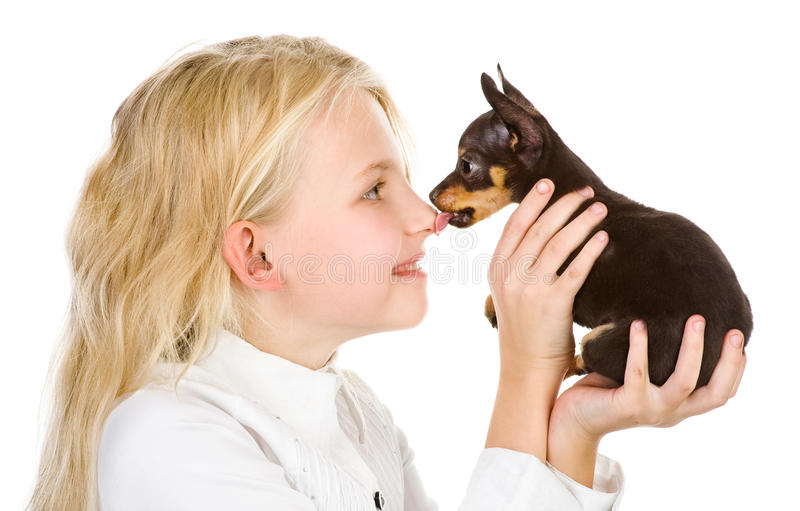 The tiny puppy kisses the girl on a nose. Isolated on white background stock image