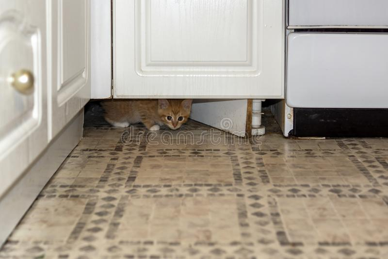 Tiny red kitten is wary looking out from under furniture. The tiny red kitten is wary looking out from under the kitchen furniture royalty free stock photography