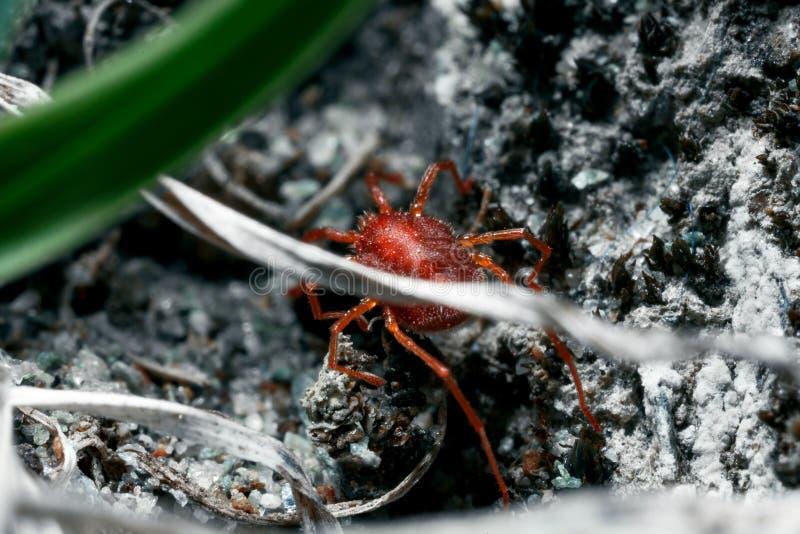Something arthropod and invertebrate stock photo