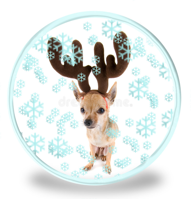 Download Tiny reindeer stock image. Image of paws, breed, mammal - 7268019