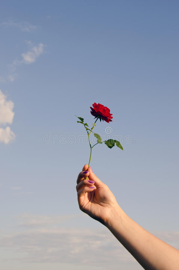 Download Tiny Rose Ring. Stock Photo - Image: 20559430