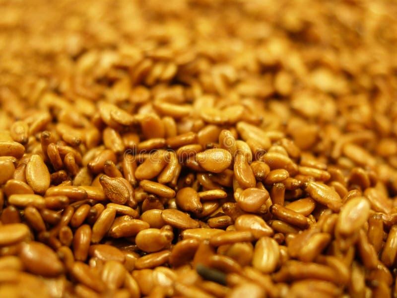 Tiny sesame seeds stock photography