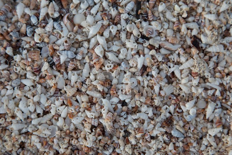 Tiny Shell Beach Background/Texture stock images