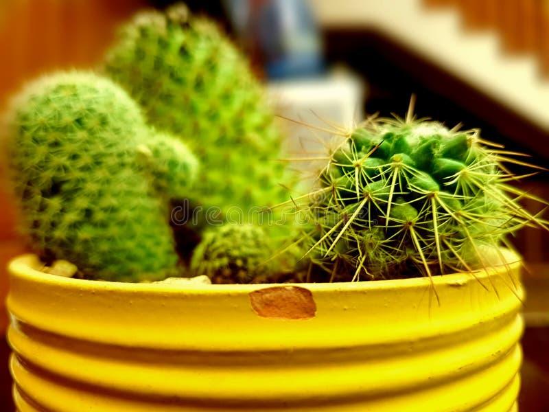 Tiny yet spiky royalty free stock photo