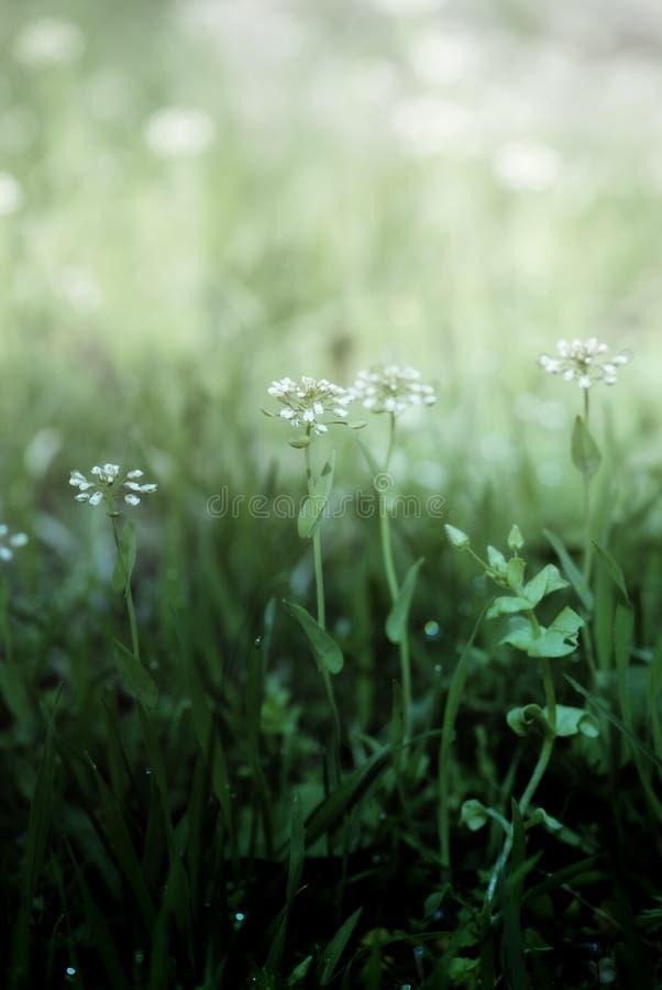 Download Gentle Spring flowers stock image. Image of idyllic, meadow - 30168459
