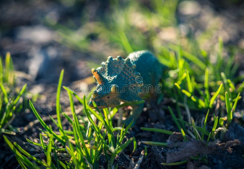 Tiny toy triceratops in the grass. Abstract royalty free stock photos