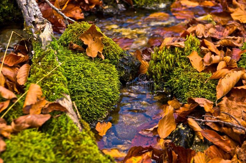Tiny water stream through moss and fallen leaves at autumn, Radocelo mountain stock photos