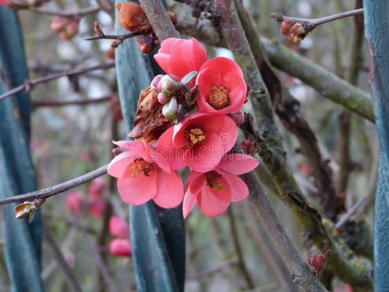 Tiny wonders of Spring stock photos