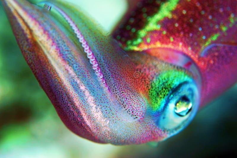 tioarmad bläckfisk royaltyfri fotografi