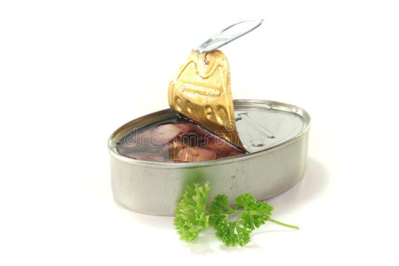 tioarmad bläckfisktin royaltyfri bild