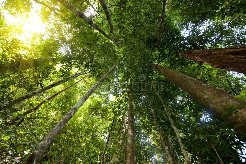 Tioman island rainforest stock photo