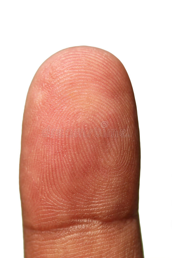 Tip of human hand showing unique finger print. Lines as repeating patterns forming identity of a person. The photograph is isolated on white background with royalty free stock photo