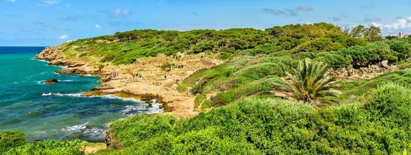 Tipasa废墟,一罗马colonia在阿尔及利亚,北非 图库摄影