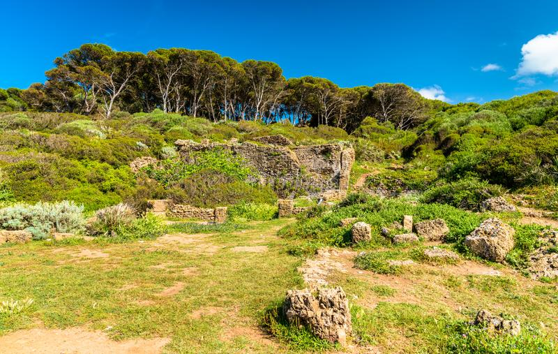 Tipasa废墟,一罗马colonia在阿尔及利亚,北非 库存图片