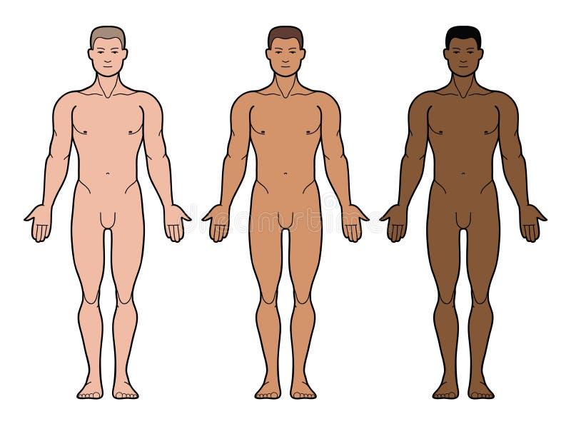 3 tipi di incarnati dell'uomo royalty illustrazione gratis