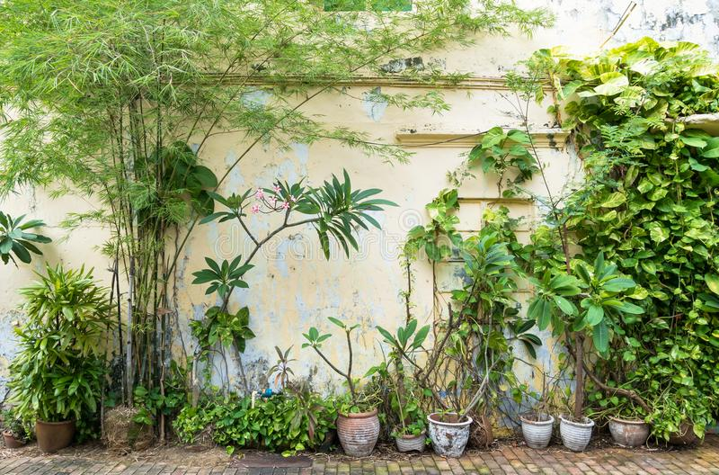 Tipi di varietà di piante fotografie stock libere da diritti