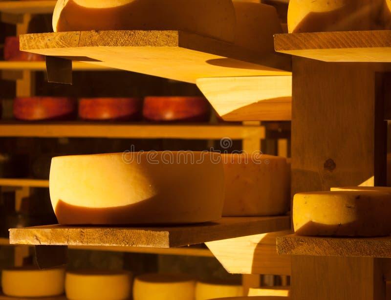 Tipi differenti dei formaggi dentro un processo di fermentazione in attesa livellato della cantina fotografia stock