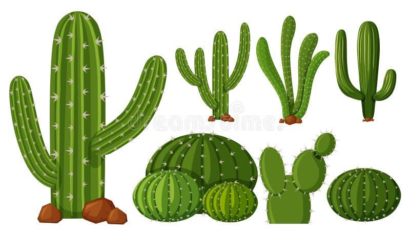 Tipi differenti di cactus illustrazione di stock