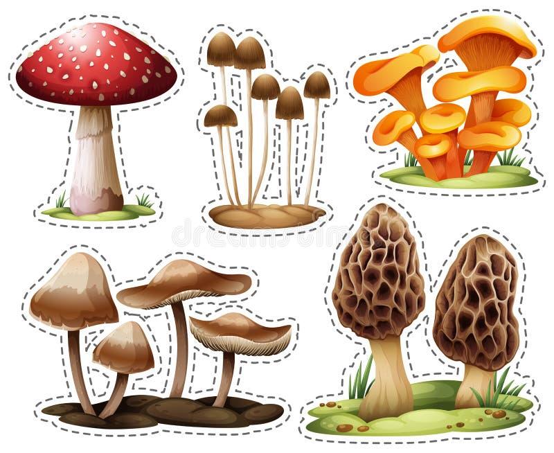 Tipi differenti di funghi royalty illustrazione gratis