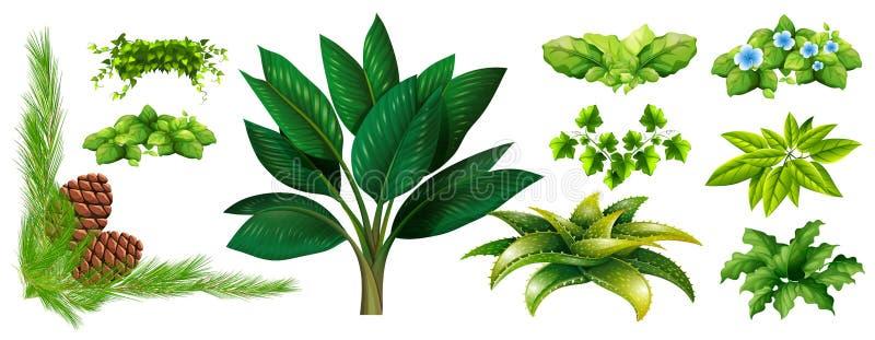 Tipi differenti di piante royalty illustrazione gratis