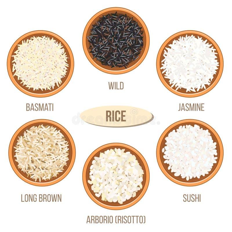 Tipi differenti di risi in ciotole Basmati, selvaggio, gelsomino, marrone lungo, arborio, sushi illustrazione vettoriale