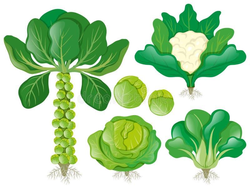 Tipi differenti di verdure cape royalty illustrazione gratis