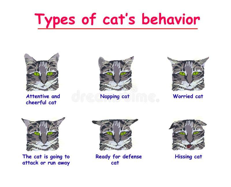 Tipo de comportamento dos gatos no fundo branco O gato atento e alegre, adormecido, preocupado, gato está indo atacar ou correr ilustração do vetor
