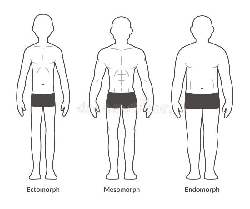 Tipo de cuerpo masculino carta ilustración del vector
