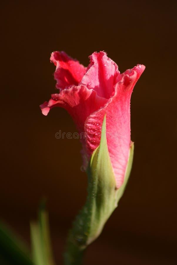Tipo de flor imagem de stock