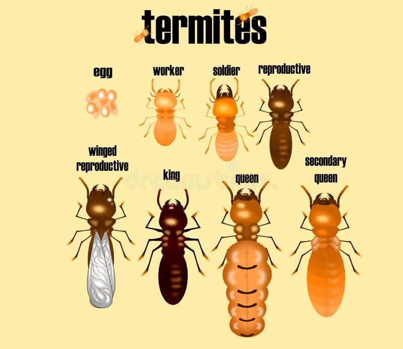 Tipo di termite, raccolta della formica bianca, stile del fumetto, illustrazione di stock