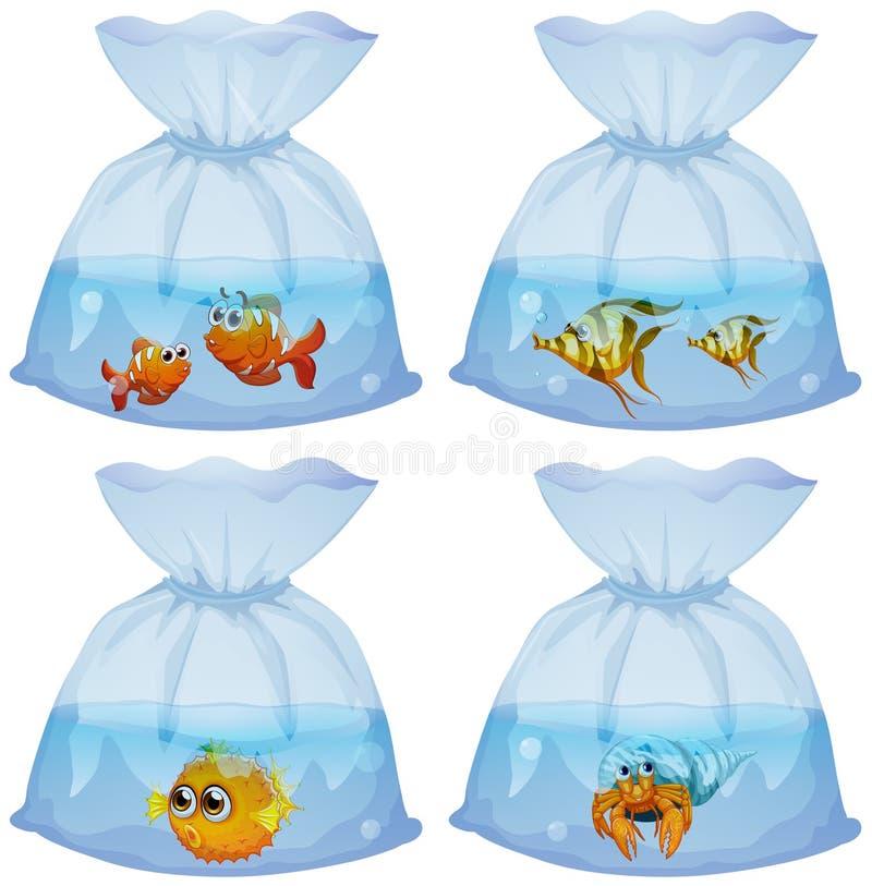 Tipo diferente dos peixes nos sacos ilustração do vetor