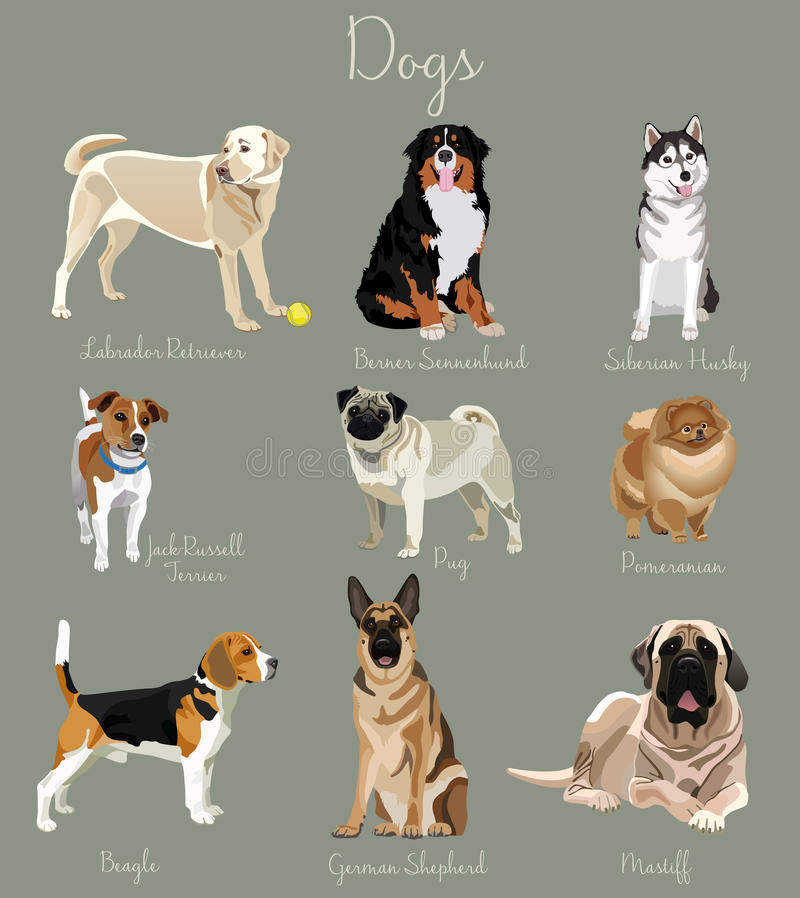 Tipo differente di insieme dei cani isolato Grandi e piccoli animali illustrazione vettoriale