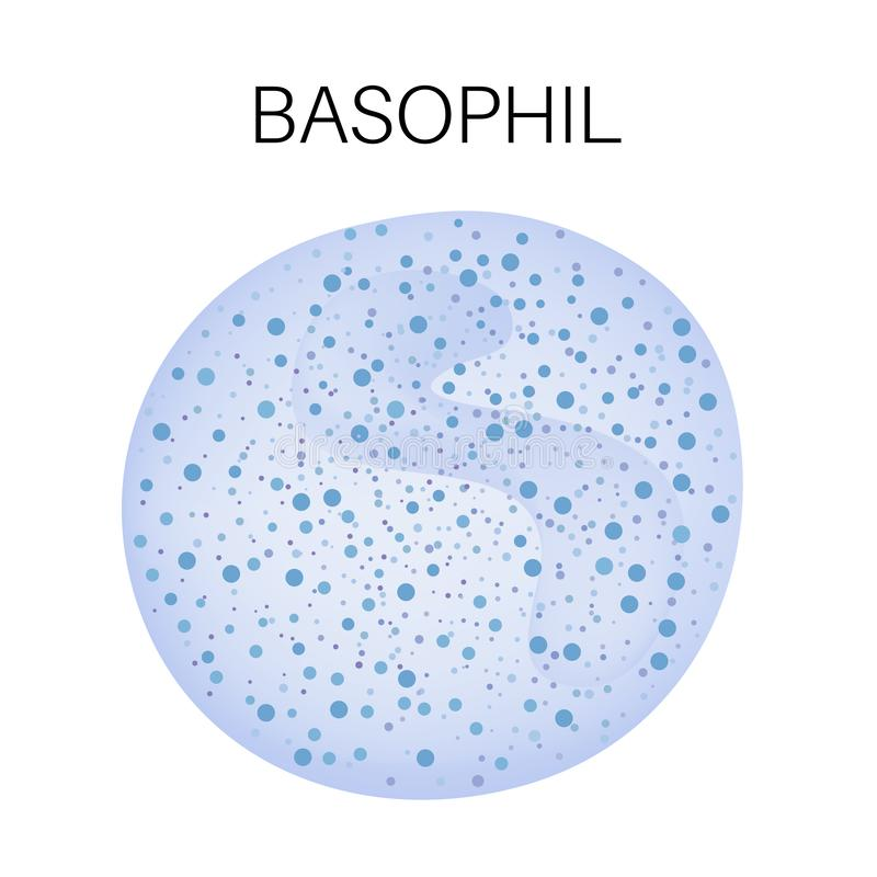 Tipo do glóbulo branco - basófilo ilustração do vetor