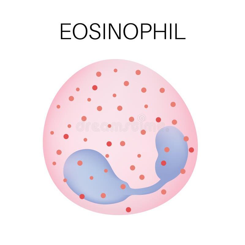 Tipo do glóbulo branco - Eosinophil ilustração royalty free