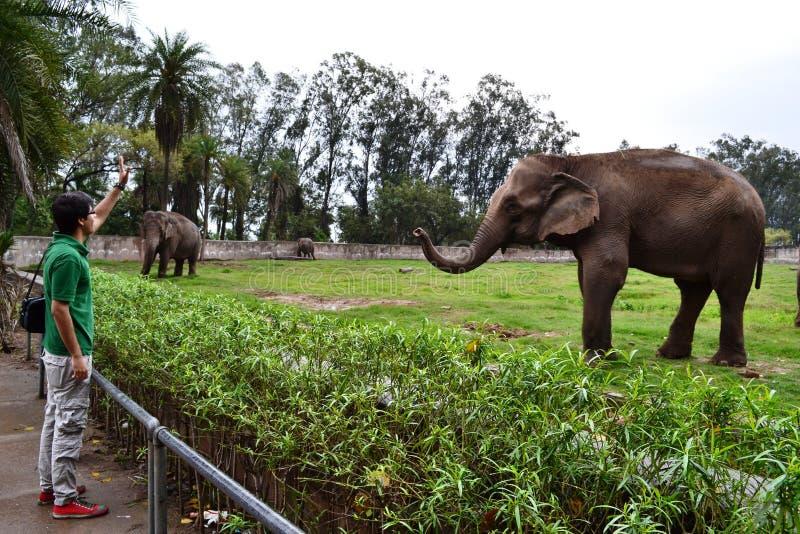 Tipo e un elefante fotografia stock