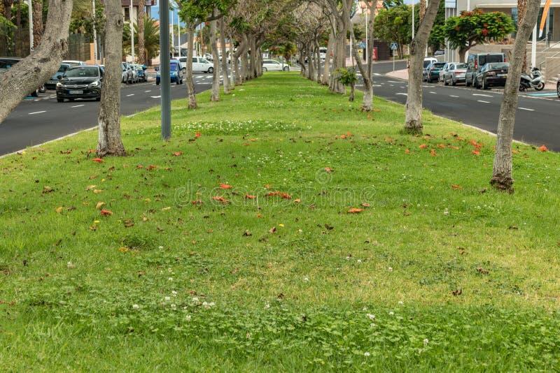 Tipo enselvado callejón de la calle a lo largo de la carretera de asfalto de la ciudad callejón con las hojas secas caidas a la h fotos de archivo