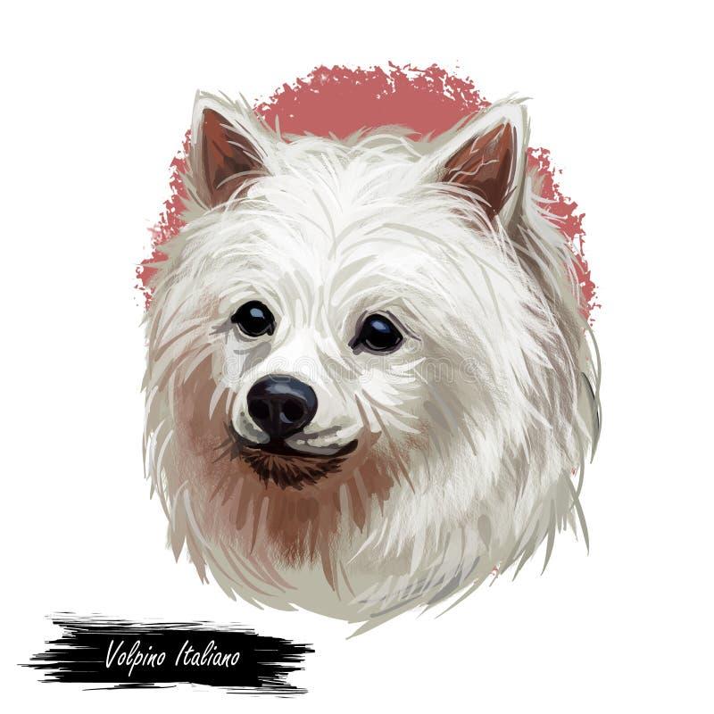 Tipo retrato do spitz do cão de Volpino Italiano da raça isolado no branco Ilustração da arte de Digitas, desenho animal da aquar ilustração royalty free