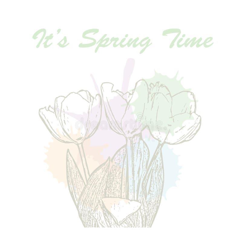 tipografia disegnata a mano dell'iscrizione di tempo di molla del ` s con i fiori del tulipano e le macchie pastelli dell'acquere illustrazione vettoriale